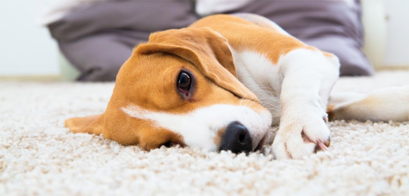 carpet-cleaning-in-glasgow